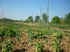 padova,orti urbani,ambiente,agricoltura