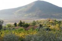 padova, blog di padova, colli euganei, olio novello, cornoleda, olio colli euganei, frantoio euganeo, parco regionale colli ulivi, parco regionale dei colli euganei